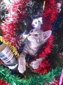 Christmas Nosey.