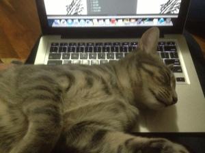 Were you writing? You should be patting.